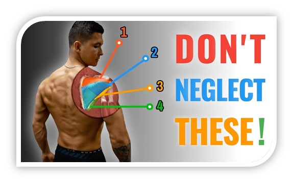 Building integrated back muscles