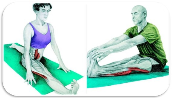 Stretching muscles is a brilliant method to reduce lower back pain