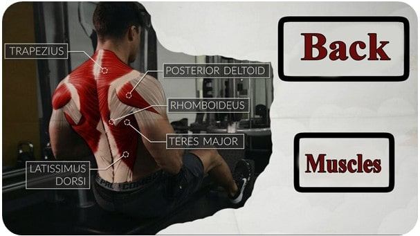 Photo of Learn the anatomy of back muscles