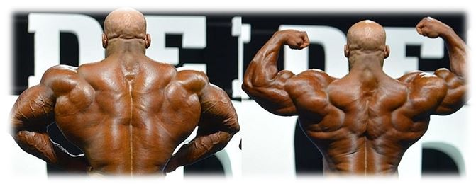 Huge back muscles of Big Ramy
