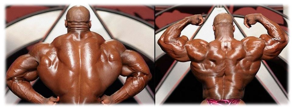 ronnie coleman back muscles
