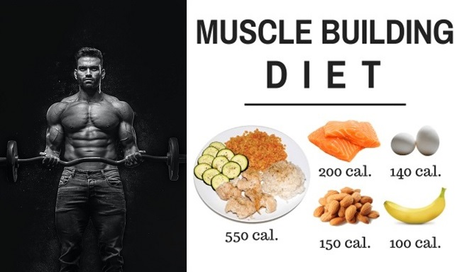best diet for gaining muscle