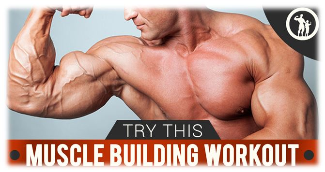 build muscle workout plan