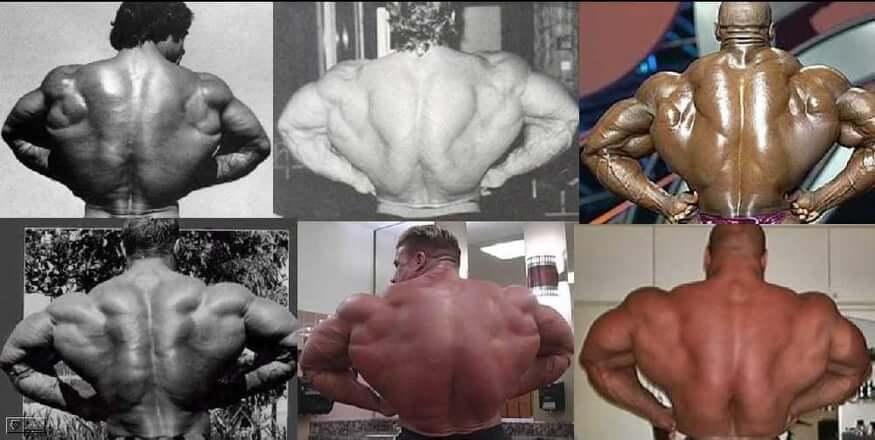 get huge back muscles