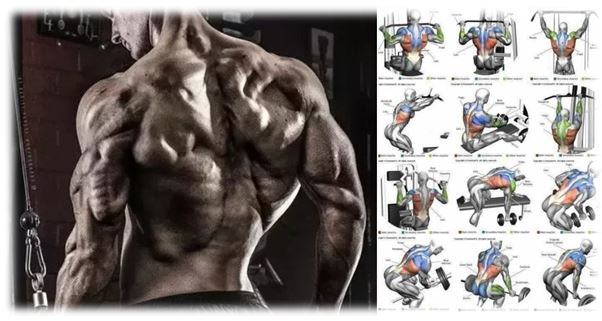Guide for Best 10 Back Exercises