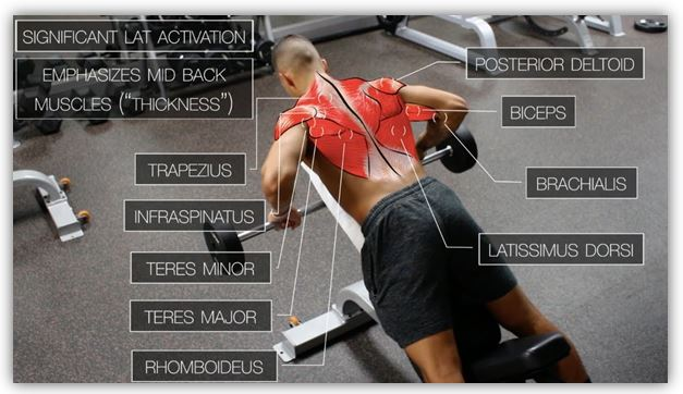How to do back exercises and their types