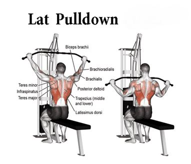 Lat Pull-down Exercise